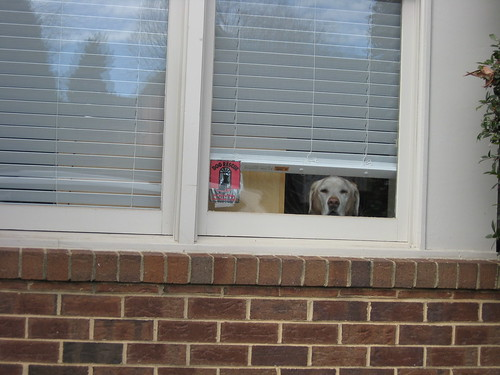 Hes watching me drive away