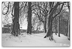 Winter in Groningen stad,the Netherlands,Europe (Aheroy(2Busy)) Tags: park city winter bw snow holland art netherlands dutch architecture photomanipulation fun town europe colours different sneeuw arts nederland surreal single hallucination groningen stad beautifull rawhdr aheroy aheroyal