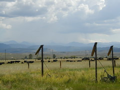 OLYMPUS DIGITAL CAMERA (bootjack ranch) Tags: usa animals landscape cows wyoming cora bootjackranch