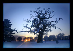 Mount Juliet (M A K E H O E) Tags: blue ireland sunset dublin snow tree beach landscape cityscape beaches waterford