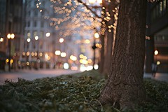 015/365 (mckenziemedia) Tags: street morning chicago blur reflection tree canon reflections eos lights iso100 bokeh f14 14 scene 55mm 5d 365 55 randolphstreet wideopen daleyplaza rikenon project365 stevemckenzie mckenziemedia 15000refrigeratorscom