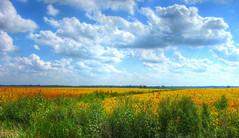 fields sky
