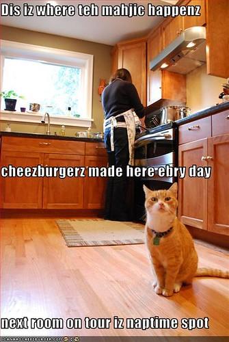 tourguide cat