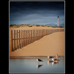 El Faro, la valla y las gaviotas / The Lighthouse, the fence and the Gulls (Novo59/Antonio Novo) Tags: espaa 20d canon canon20d andalucia cadiz gaviotas playas faros antonionovo estremit thebestofday gnneniyisi novo59