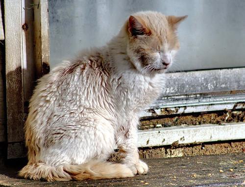 Not Feeling So Well, White Cat