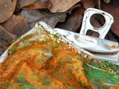 ____________________in de goot (leo59) Tags: green beer heineken rust groen can leo59 hood bier blik roest