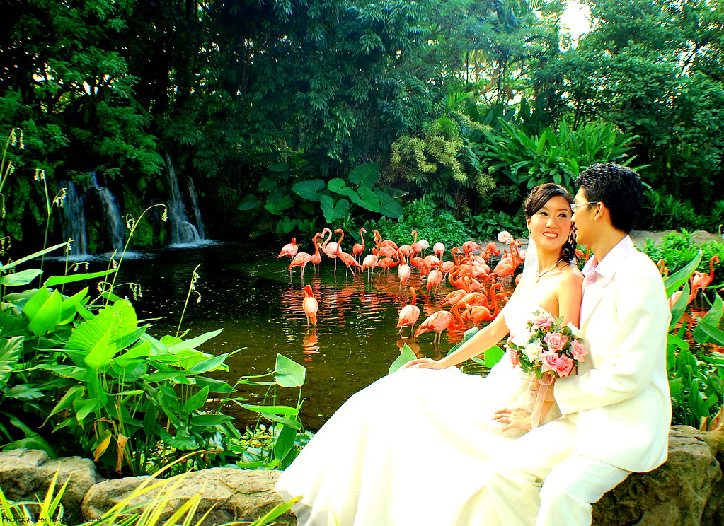 Wedding at Bird Park, Singapore