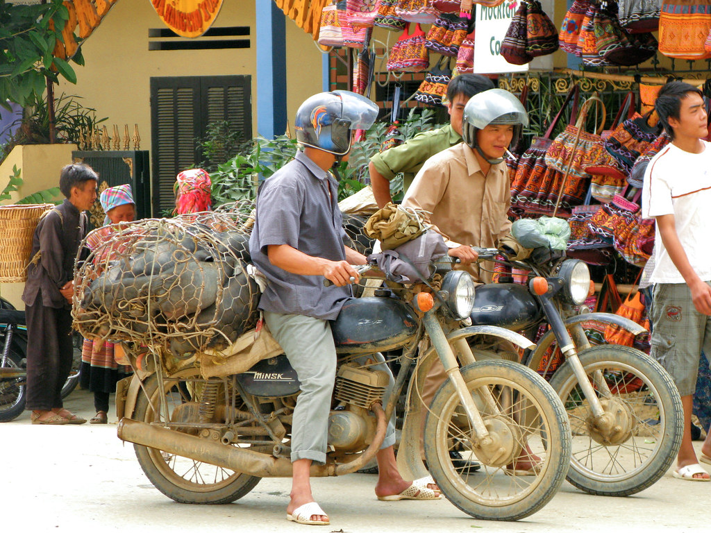 Bac Ha Market : Two men get ready for the off, There's 20 pigs on each bike! Vietnam
