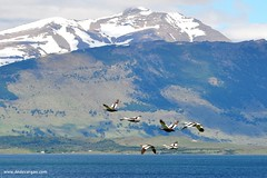 Puerto Natales...
