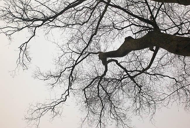 西湖樹04