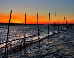 baklad (fishpens) in pililia, Laguna (Bosso Baron) Tags: sunset orange seascape water bay philippines silhoutte bamboos fishpen pililia lagunabay baklad