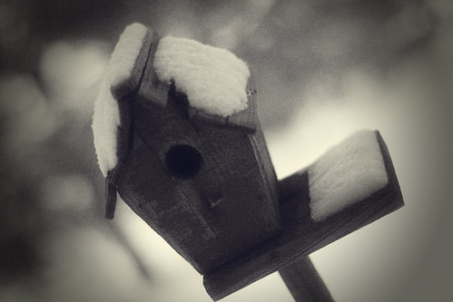 birdhouse10