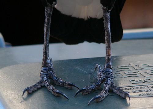 pigeon toed 4