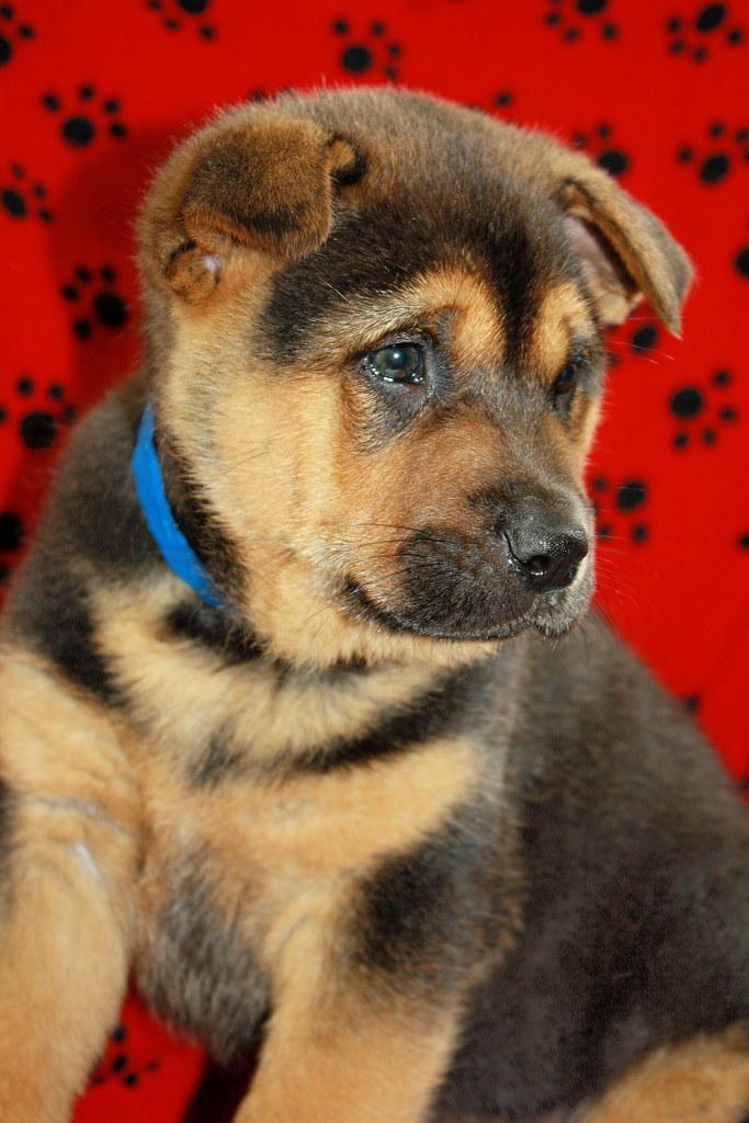 Dog Rescue Stirling