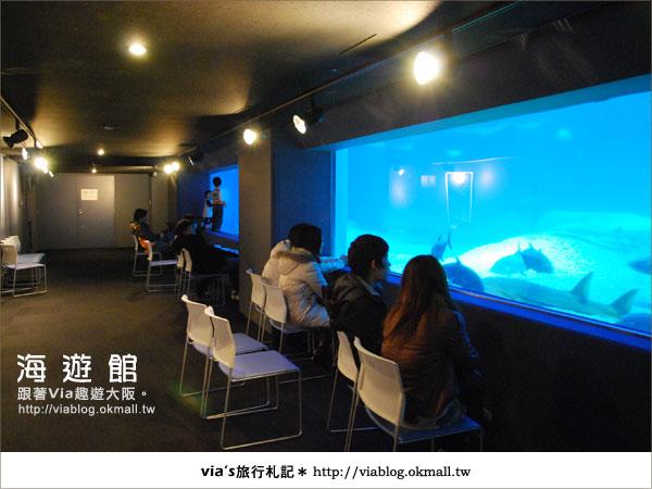 【via關西冬遊記】世界最大極的水族館~大阪海遊館22