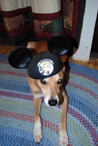 Disney Rex