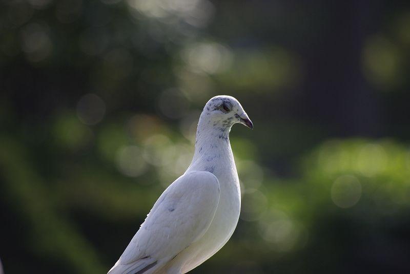 出遊的鳥圖
