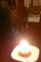 We put some candles in some cat food to celebate
