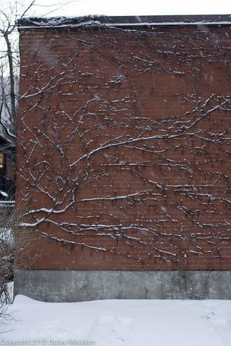 Snow branch red