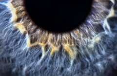 Eye (martinturner) Tags: macro eye sigma veins 105 speedlight pupil raynox martinturner msn202 yongnuo