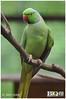 KL Bird Park (radiobiq) Tags: park bird parrot birdpark burung klbirdpark kakaktua helang burungkakaktua