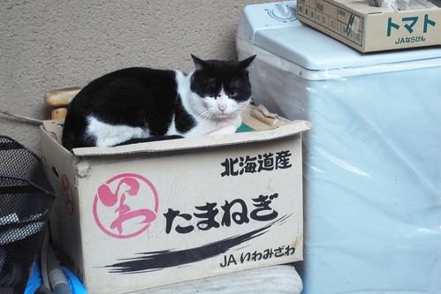 Today's Cat@2010-03-04