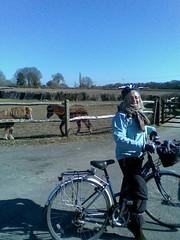 Anne & ponies