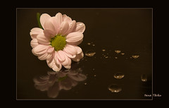 ... (TOanaM) Tags: flowers reflection nature otw mywinners nikond80