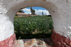 baudchon-baluchon-titicaca-IMG_9312-Modifier