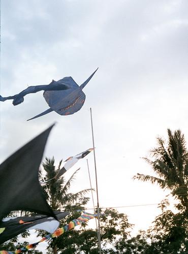 飛吧~小鯊魚!