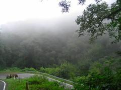 RIMG6085x1000 (Weltbummler) Tags: yerbabuena tucumn bosquenublado nuboselva