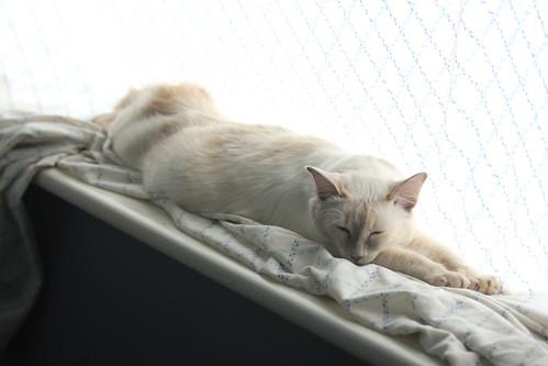 Long Cat_2575