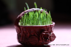 Happy New Persian Year 1389 (FarshadPix) Tags: new macro green nature canon 50mm persian iran year ceremony objects happiness ground eyd norouz nowrooz nowruz       farshadpixcom