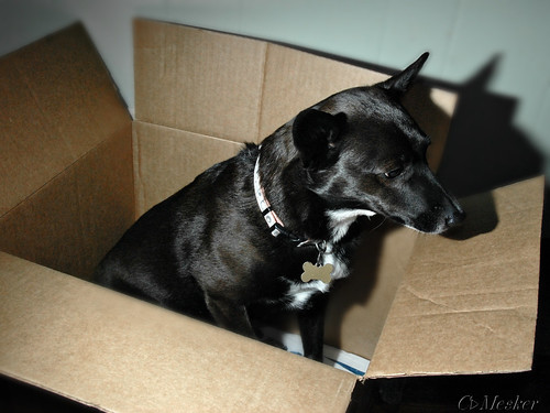 Pup in a Box - 84/365