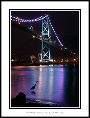 Lions Gate Bridge / Vancouver / Reflection / Georgia Straight / Heron / British Columbia / BC / Kyle Bailey / Canon / Stanley Park (Kyle Bailey - Da Big Cheeze) Tags: bridge inspiration color colour bird heron water colors night vancouver canon lights colours traffic illuminated professional example stanleypark lionsgatebridge blueheron inspire lionsgate vancouverbc critique mywinners kylebailey rookiephoto dabigcheeze wwwrookiephotocom