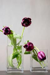 1003 flowers #9