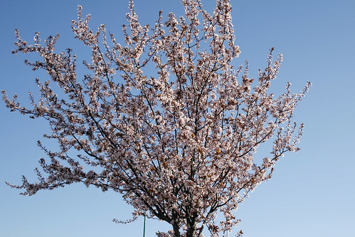 Hola primavera :)