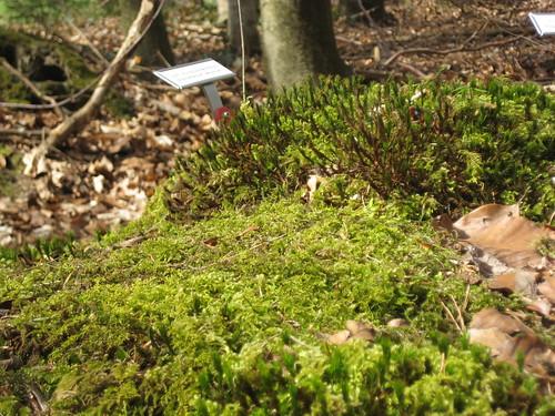 Unterschiedliche Moose auf einem Baumstumpf am Ökologischen Waldlehrpfad