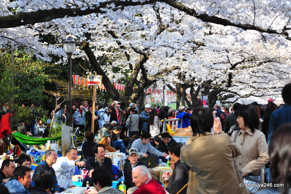 More happy scenes from hanami watchers.