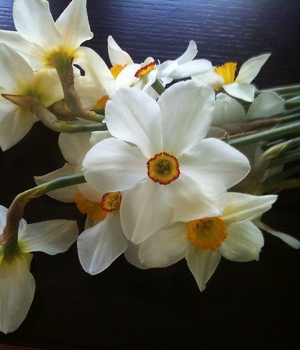 A bunch of our daffodils bloomed overnight! Picked some to share springtime inside.