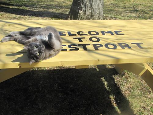 Vinson welcomes you to Westport