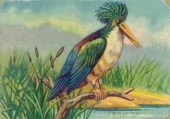 oiseauchromos 3