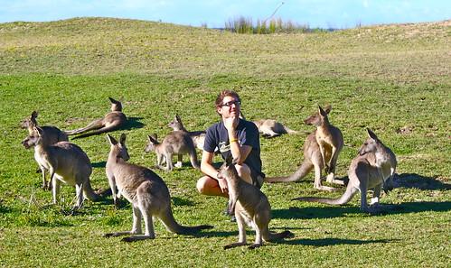 Pebbly Beach Kangaroos Australia - 174