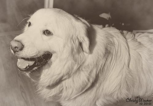 Buddy - 96/365