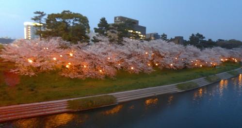 Sakura lights