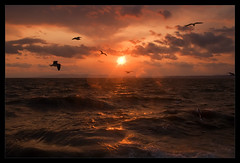 sunset (huan.matus) Tags: sunset sea nikon waves seagull nikkor vladivostok  d300  18200mm