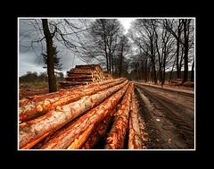 Landscape (Theo Kelderman) Tags: trees holland netherlands canon landscape bomen nederland overijssel landschap 2010 holterberg boomstammen theokeldermanphotography bosisgekapt