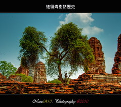 (nans0410) Tags: tree thailand nikkor monuments ancientcivilization  ayutthaya   nikond90 earthasia tremendousdestruction