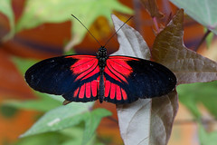 baudchon-baluchon-mindo-papillons-17