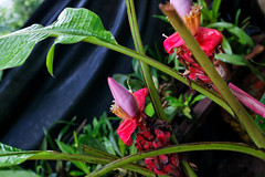 baudchon-baluchon-mindo-orchidees-14